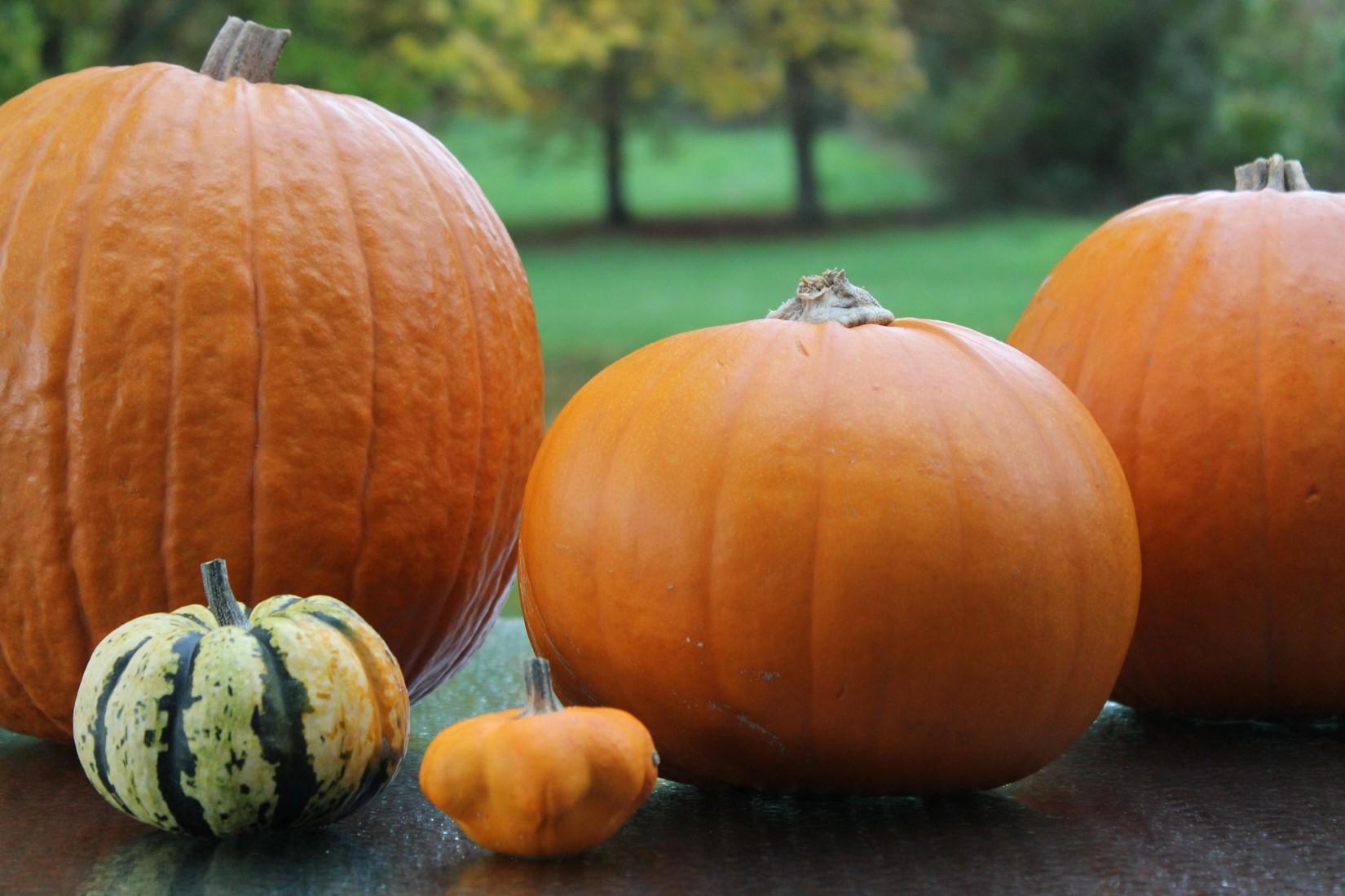 décoration halloween citrouilles
