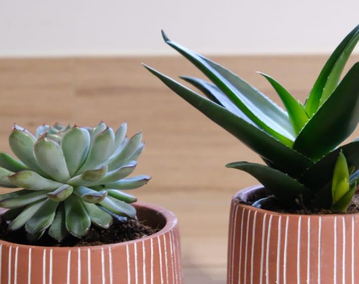 pot-terre-cuite-plantes-decoration-cuisine